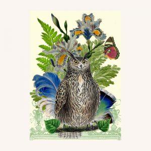 Mr Owl Card