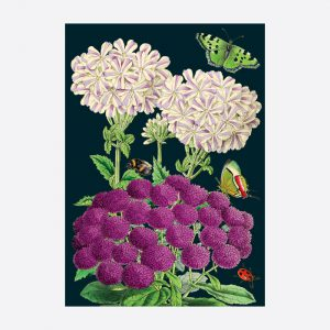 Purples Card