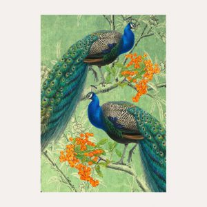 Peacock & Orange Berries Card